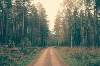 The Roadmap to Financial Wellness and a Purposeful Life