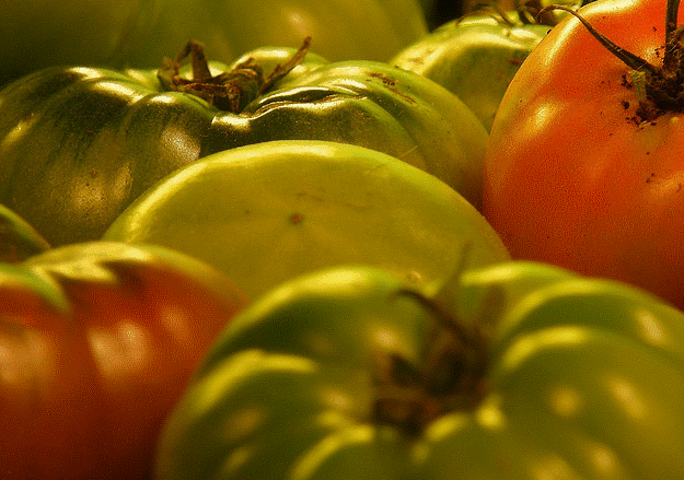 fresh tomatoes garden tips